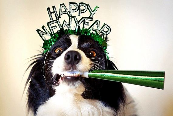 13-New-Years-Dogs1