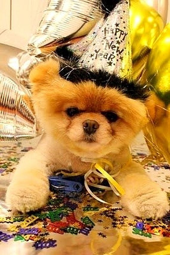 14-New-Years-Dogs1