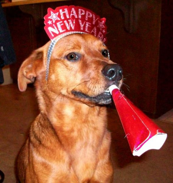 18-New-Years-Dogs1