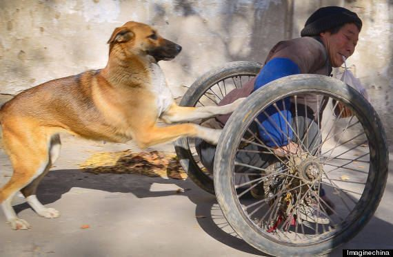 You Won't Believe The Lengths This Pup Goes To Lovingly Help His Paralyzed Owner