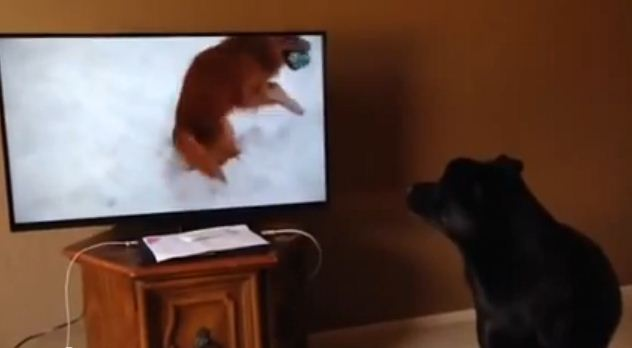This Guy Is Watching A Dog Video. Watch How His Dog Reacts To It!