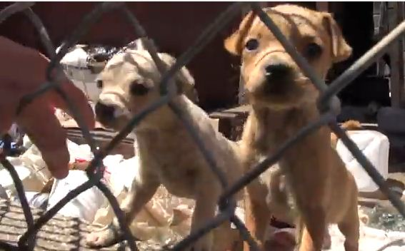 This Homeless Family Of Pups Was Rescued From The Streets Of LA