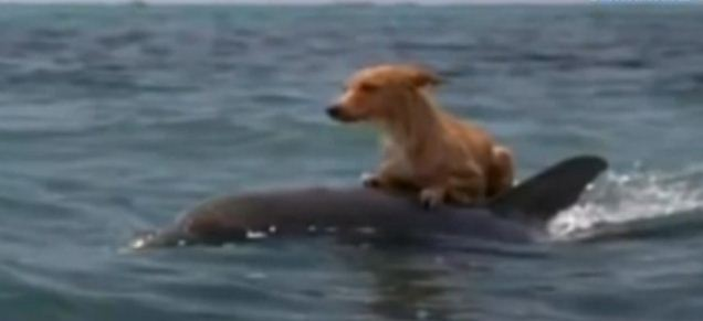 This Dog Wakes Up Every Morning And Goes For A Swim With A Dolphin