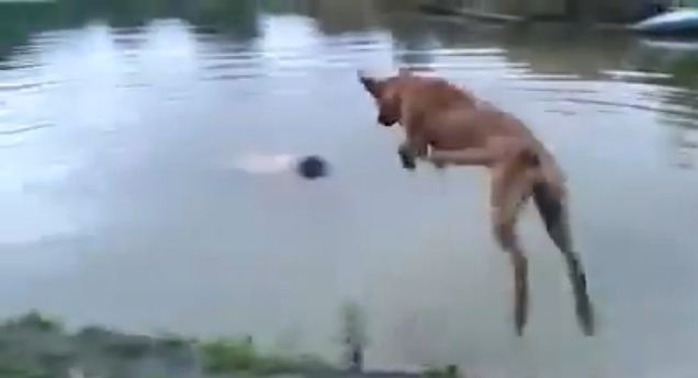 Watch What This Dog Does When He Thought His Owner Was Drowning!