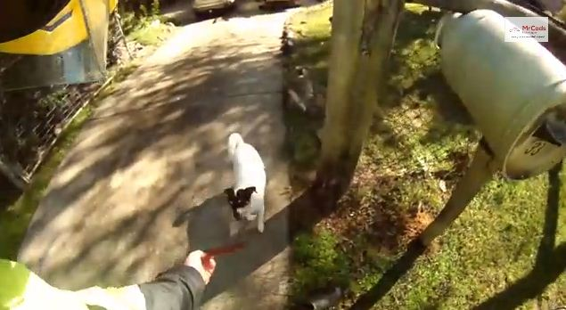 Friendly Australian Postman Greets EVERY Dog On His Mail Route!