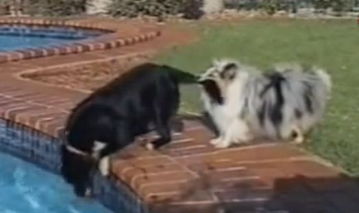 You'll Crack Up Watching These Two Dogs Go After A Ball
