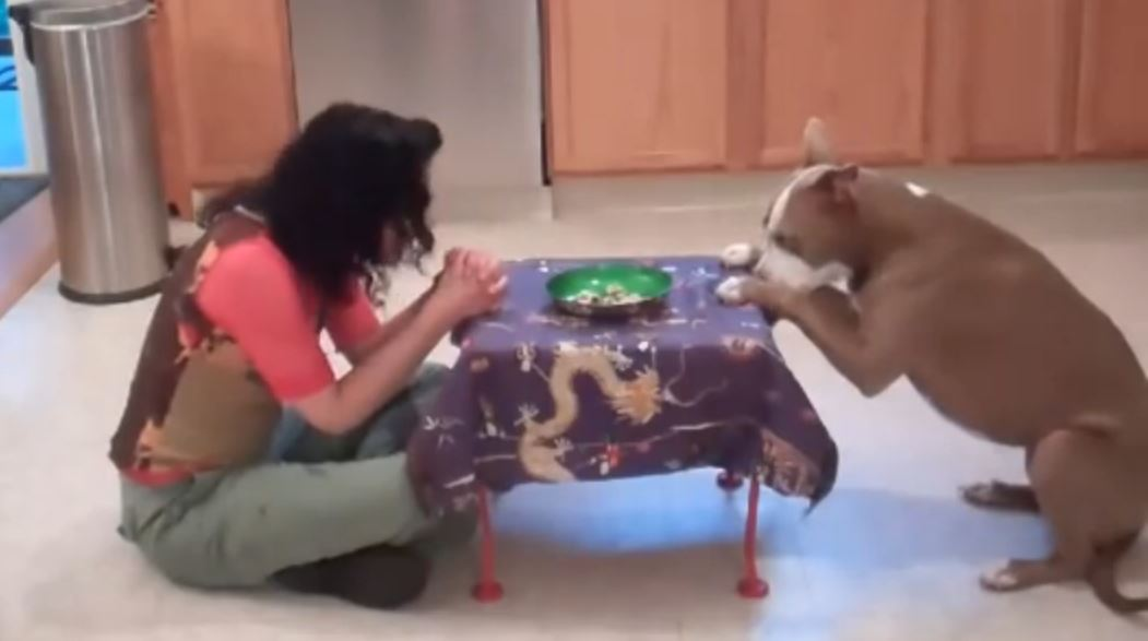 She Told Everyone She Had The Smartest Pit Bull In The World, And Now She Has Proof!