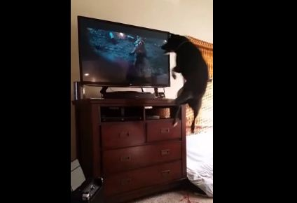 This You Gotta See! I've Never Seen A Dog Watch TV Like This!