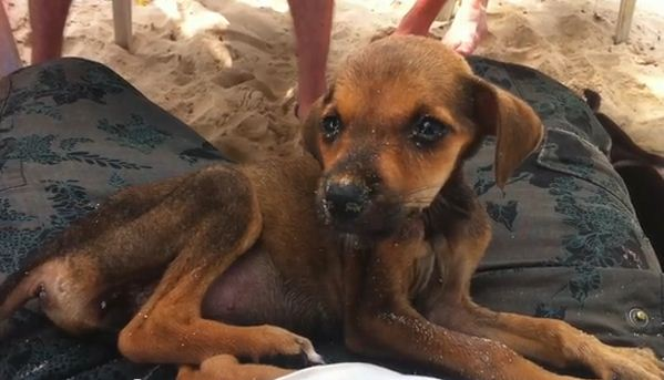 While On Vacation They Found a Starving Puppy. You'll Never Guess What They Did Next!