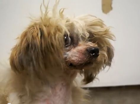 This Abused Dog Ran Away, Lost A Leg, & Found A Forever Home!