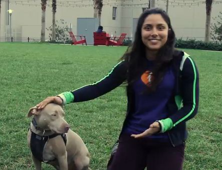 When People Meet Pit Bulls For The First Time What Happens May Surprise You!