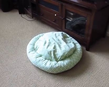 There's Something Under This Bed That's Making It Move! Watch & Find Out What It Is!