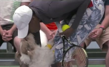 These ADORABLE Dogs Might Just Put Traditional Ball Boys Out Of Business
