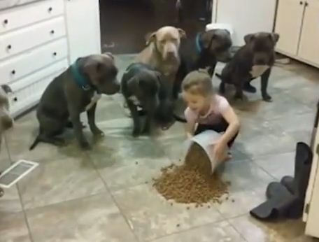 WATCH: Little Girl Has Complete Mastery Over Huge Group of Pit Bulls