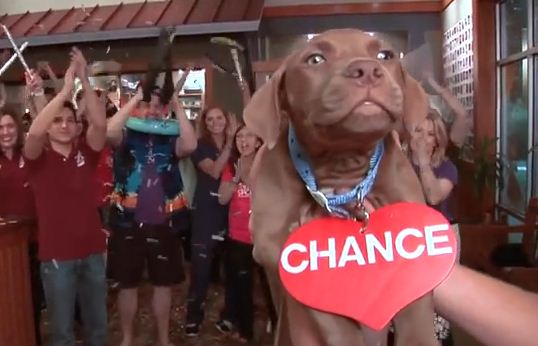 Shelter Workers Made An Awesome Music Video To Encourage People To Adopt!