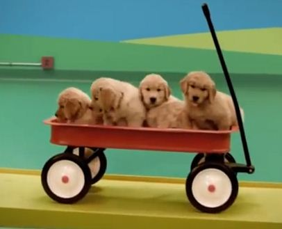 This Playfully Adorable Dog Food Commercial Will Make Your Day