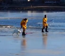 Colorado Firefighters Rescue Sophie from Icy Lake