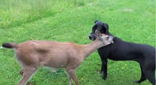 A Deer Walked Into Their Yard. You Won't Believe What Happens Next!