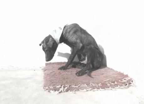 Reverse Time-Lapse Video Shows The Heartbreaking Effect Of Abandoning A Dog