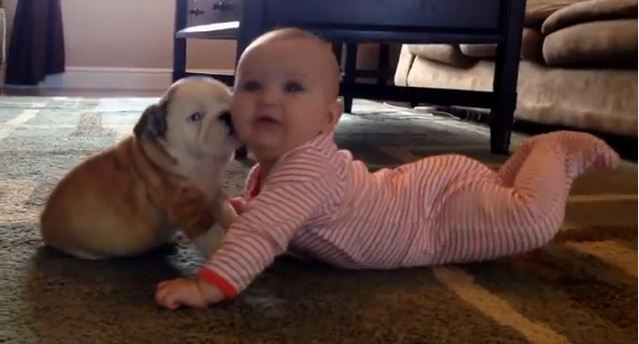 This Tiny Baby's Reaction To A Bulldog's Puppy Kisses Is Absolutely Adorable