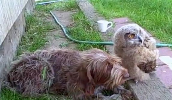 This Dog Has An Unlikely New Best Friend…A Deadly Owl!