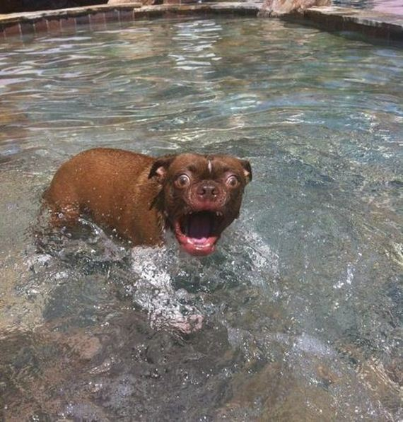 01-Dogs-Water