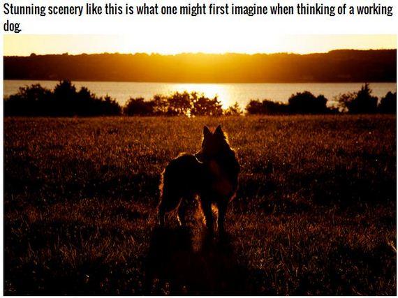 01-Inspiring-Dogs