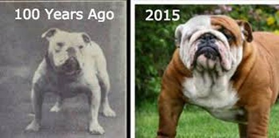 The Shocking Results Of Dog Breeding: Before & After