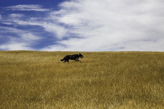 02-Inspiring-Dogs