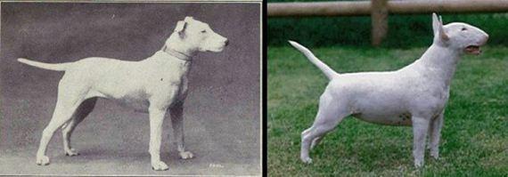 02-Shocking-Results-Dog