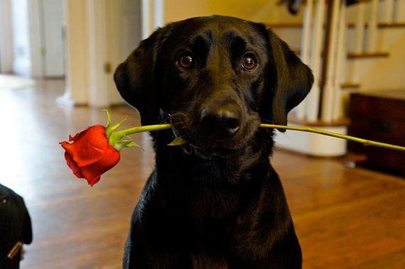 02-Valentines-Day