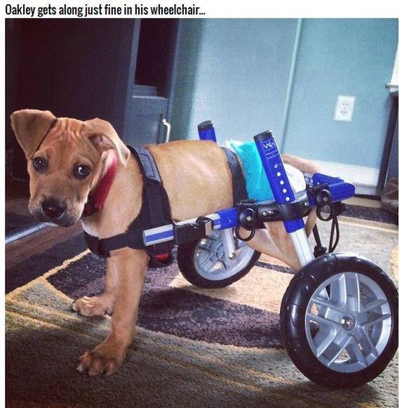 05-Bulletproof-Pup