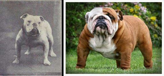 05-Shocking-Results-Dog