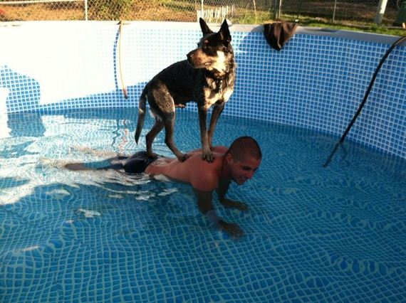 06-Dogs-Water