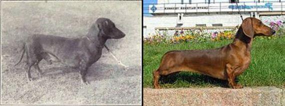 06-Shocking-Results-Dog