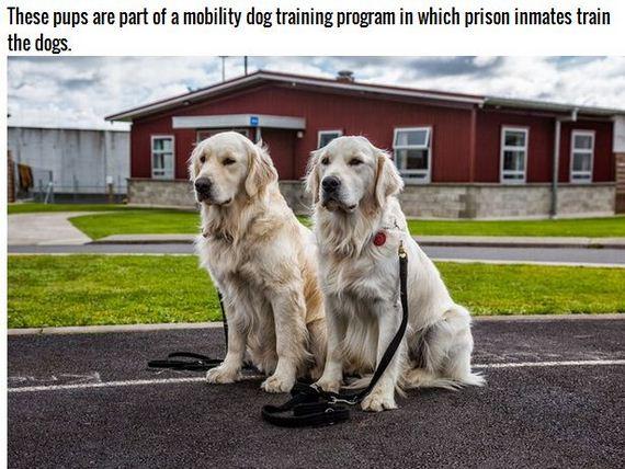 07-Inspiring-Dogs