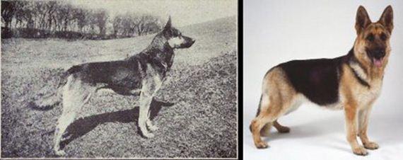07-Shocking-Results-Dog