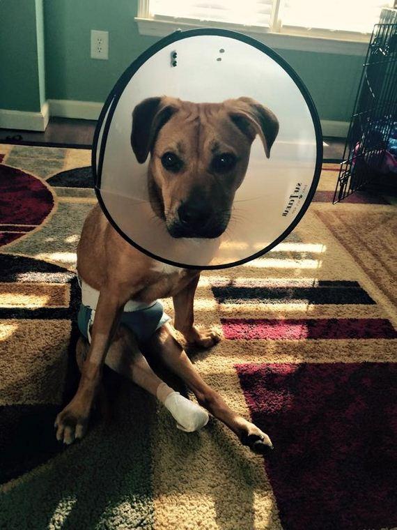 08-Bulletproof-Pup