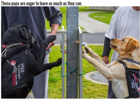 08-Inspiring-Dogs