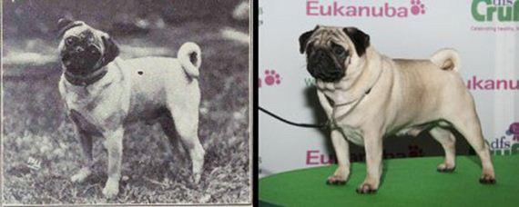 08-Shocking-Results-Dog