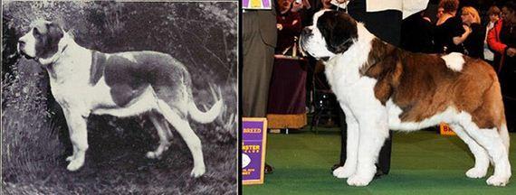 09-Shocking-Results-Dog