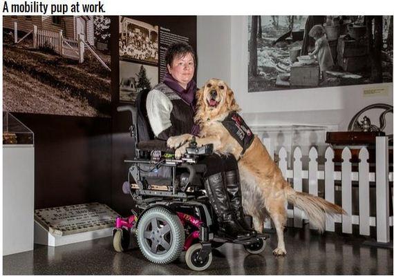 10-Inspiring-Dogs