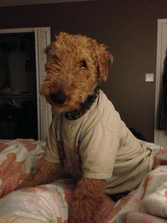 10-animals-dog-puppy