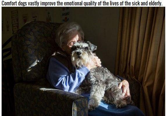11-Inspiring-Dogs