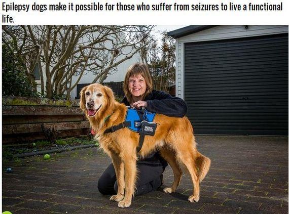 12-Inspiring-Dogs