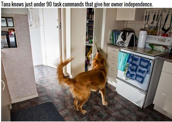 13-Inspiring-Dogs
