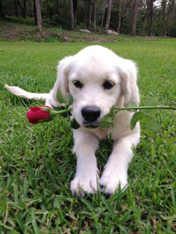 These 23 Canine Cupids Are The Best Valentine's Day Gift You Could EVER Receive