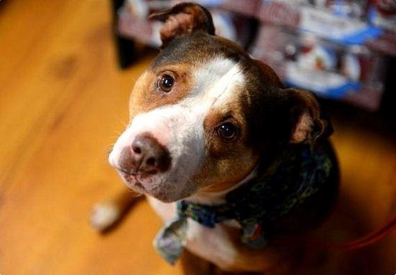 Dog Needs Home After Elderly Owner Dies