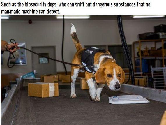 15-Inspiring-Dogs