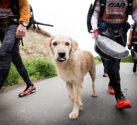 Stray Dog Joins Swedish Adventure Racing Team And Completes Grueling 6 Day Race